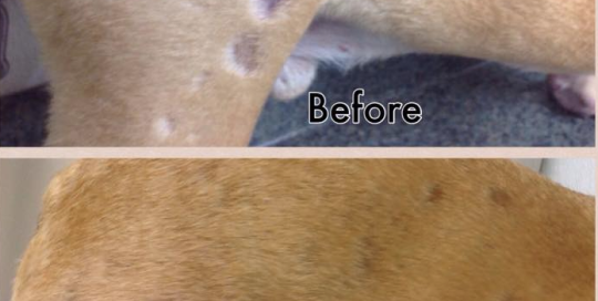 Cleaning Dog Skin Conditions