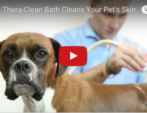 How a Thera-Clean Bath Cleans Your Pet's Skin