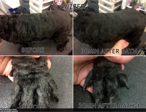 Head to Tail Pet Spa – Dry, flakey skin.